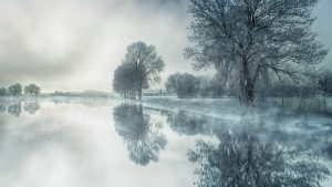Nature - Winter Scene